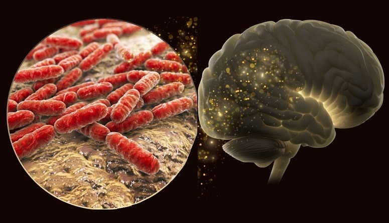 Illustration Of Brain Bacteria